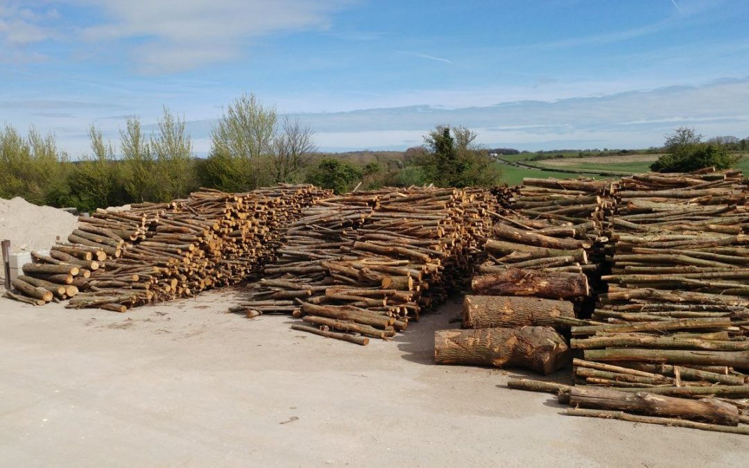 Been a busy year harvesting wood to be ready next year.